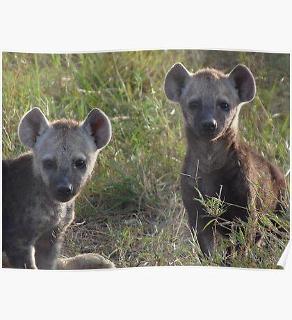 Hyena Cubs Playing at Dawn Poster