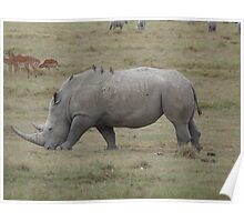 Rhino at Lake Nakuru Poster