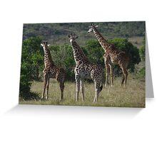 Masai Giraffe Herd Greeting Card