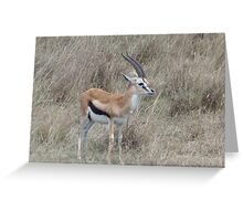 Infant Thomson's Gazelle on the Masai Mara Greeting Card