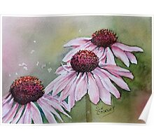 PINK CONE / DAISY FLOWER Poster