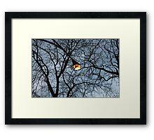 Light-post  Framed Print