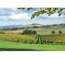 De Bortoli Winery, Yarra Valley Photographic Print