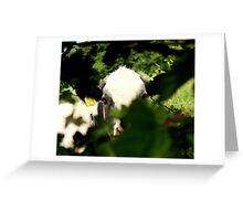 Peek-a-Cow Greeting Card