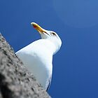 Guardian Gull by Thomas Janowski