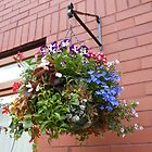 Hanging Basket with Pansies and Lobellia by MidnightMelody