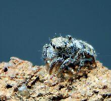 ©NS A Spider Life XXXI IA by OmarHernandez