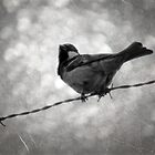 ©NS Fence Bird IA Monochromatic by OmarHernandez