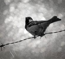©NS Fence Bird IA Monochromatic by OmarHernandez