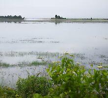 A Misty Marsh by Elizabeth Thomas