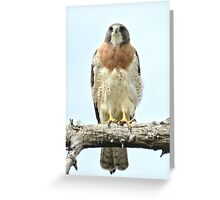 Wild Red Tail Hawk  Greeting Card