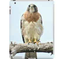 Wild Red Tail Hawk  iPad Case/Skin