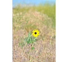 Wild Sunflower Photographic Print