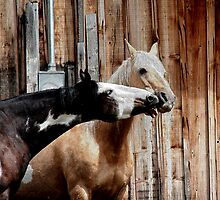 Two Paints Horse Equine Artwork by Val  Brackenridge