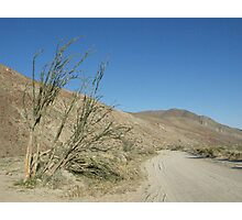 Along the road in Anza Borrego State Park Photographic Print