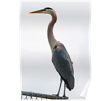 HERON PATIENTLY WAITING FOR FISH Poster