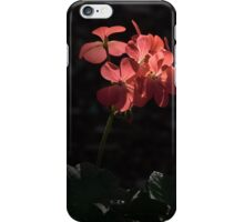 Pink flowers against the light Leith Park Victoria 20160507 6959  iPhone Case/Skin