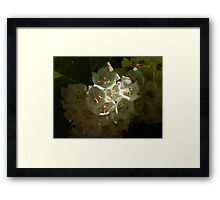 quest for the light - the white flowers Framed Print
