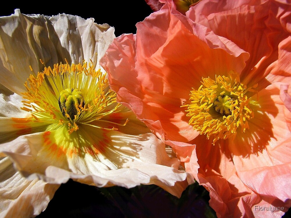 poppies by Floralynne
