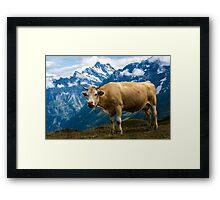 Grindelwald Cow - Bernese Alps - Switzerland Framed Print
