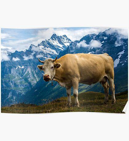 Grindelwald Cow - Bernese Alps - Switzerland Poster