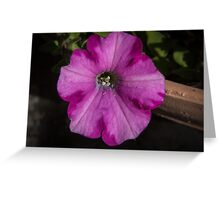 Purple flower Leith Park Victoria 20160507 6960  Greeting Card