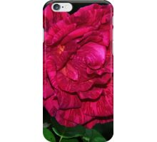 Hot pink and Red Intuition Rose Leith Park Victoria 20160511 6963  iPhone Case/Skin