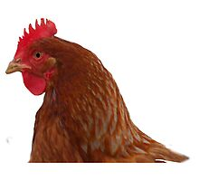 Isa brown hen by ndarby1