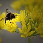 THE BEE AND THE FLOWER by leonie7