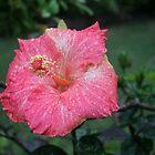 Rain Enrichment by koicharisma1