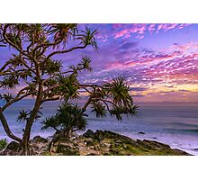 Sunrise and Pandanus Palms Photographic Print
