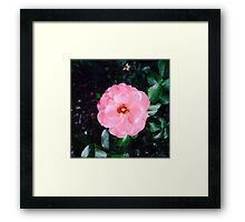 Beautiful Pink Flower Framed Print