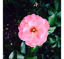 Beautiful Pink Flower Photographic Print