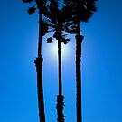 Palm trees in the sun by NuclearJawa
