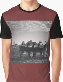 Evening Alpacas Graphic T-Shirt