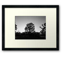 Grey Forest Framed Print