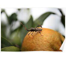 Leaf Footed Bug Standing on an Orange Poster