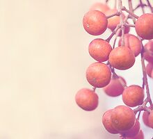 Autumn Orange Berries by Alana Stewart Photography
