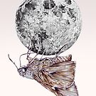 In which a moth is enticed by the light of the moon by jamesormiston