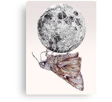 In which a moth is enticed by the light of the moon Canvas Print