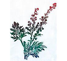Herbs a la colour Photographic Print