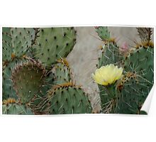 Prickly Pear Finery Poster
