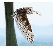 Barn Owl Rising Photographic Print