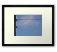Bird on a line Framed Print