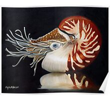 A Nautilus Study Poster