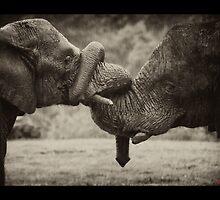 Elephant by mohik4n22