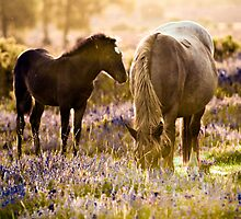 Horse and foal in the New Forest by Dave  Knowles