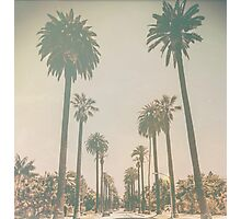 Beverly Hills Palm Drive Texture California Photographic Print