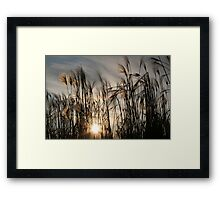 CEREALS AND SUN Framed Print