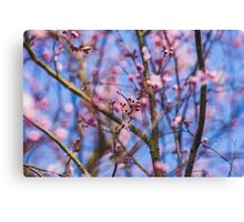 CHERRY BLOSSOM Canvas Print